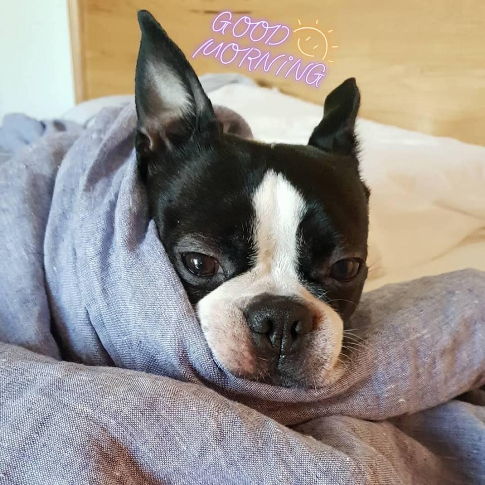 Pet in bed?