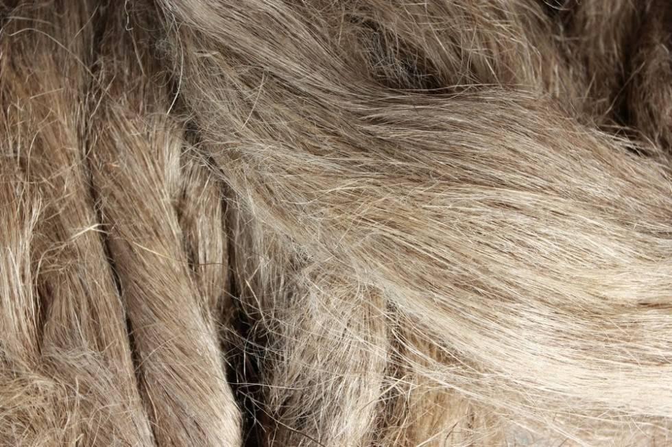 The very best linen fibers under microscope